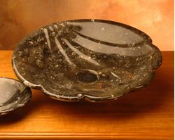 Shell Fossil Vessel from Morocco