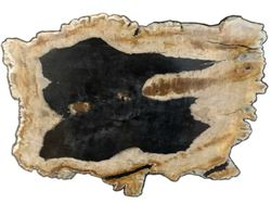 Petrified Wood Cheese Board - Large with Black Accent