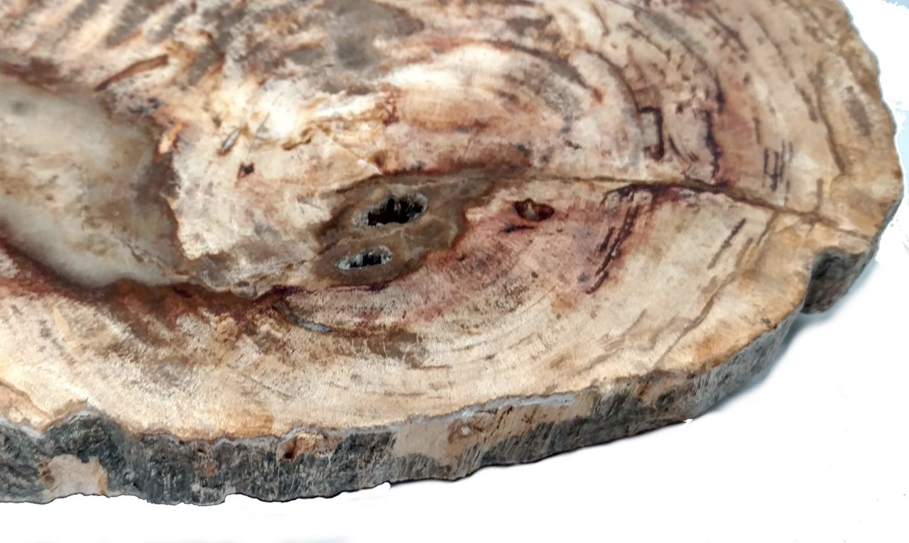 Picture of Petrified Wood Cheese Board - Small with Brown Accent